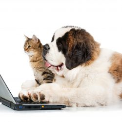 Online Pet Medication