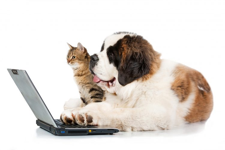 FDA Recommendations for Ordering Online Pet Medications