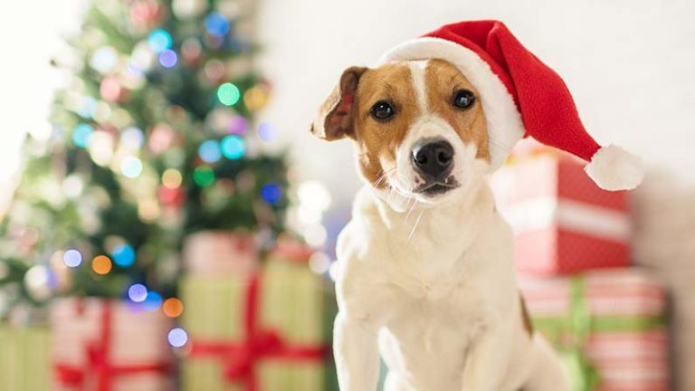 Holiday Pet Dangers