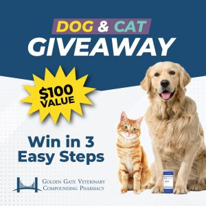 Dog & Cat Contest Graphic